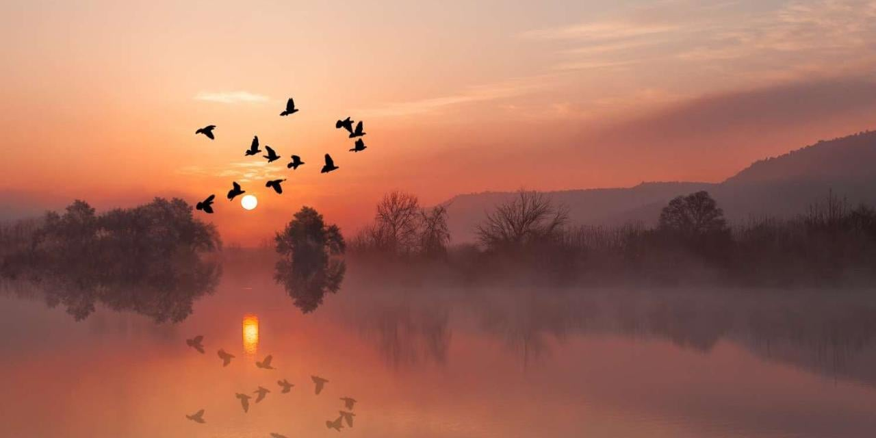 Birds flying at sunset