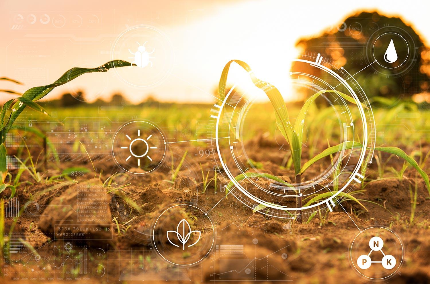 Agriculture management, in cultivated agricultural farm field with modern technology concepts
