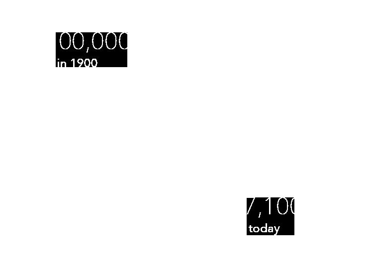 Cheetah population infographic