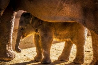 Nerd in the herd: protecting elephants with data science