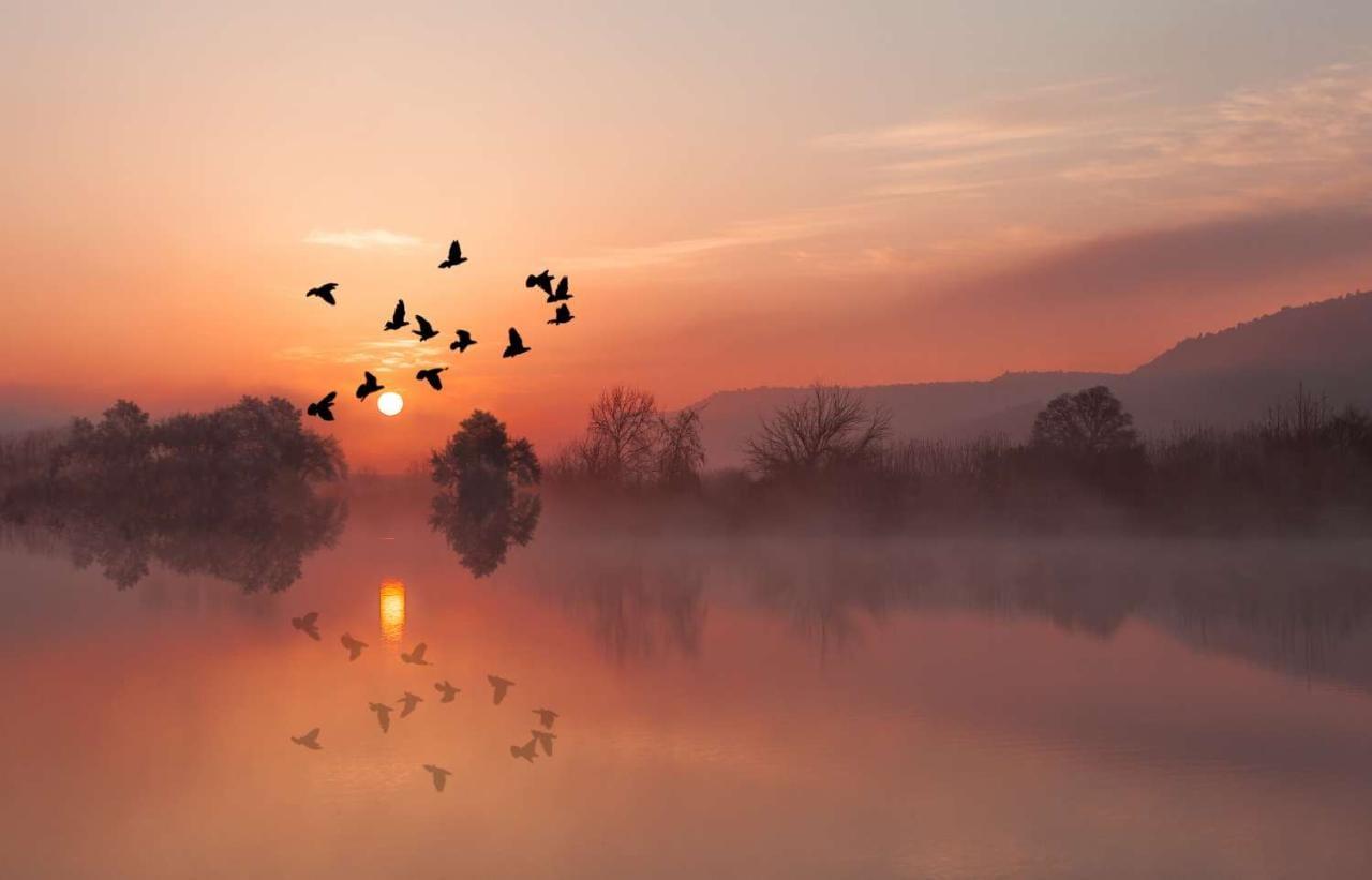 Birds flying at sunset against backdrop of lake