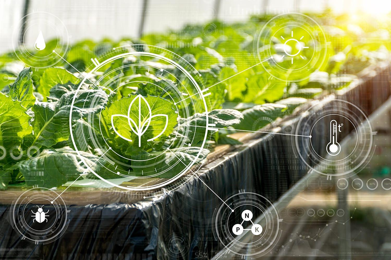 Crops being monitored with machine learning technology