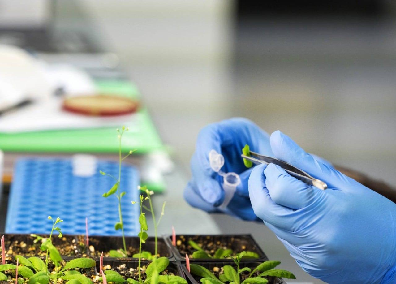 hands working with plant specimen