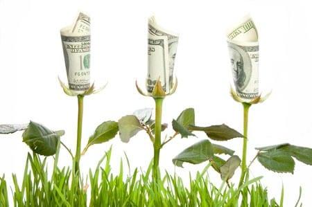 Money Flowers Dollars