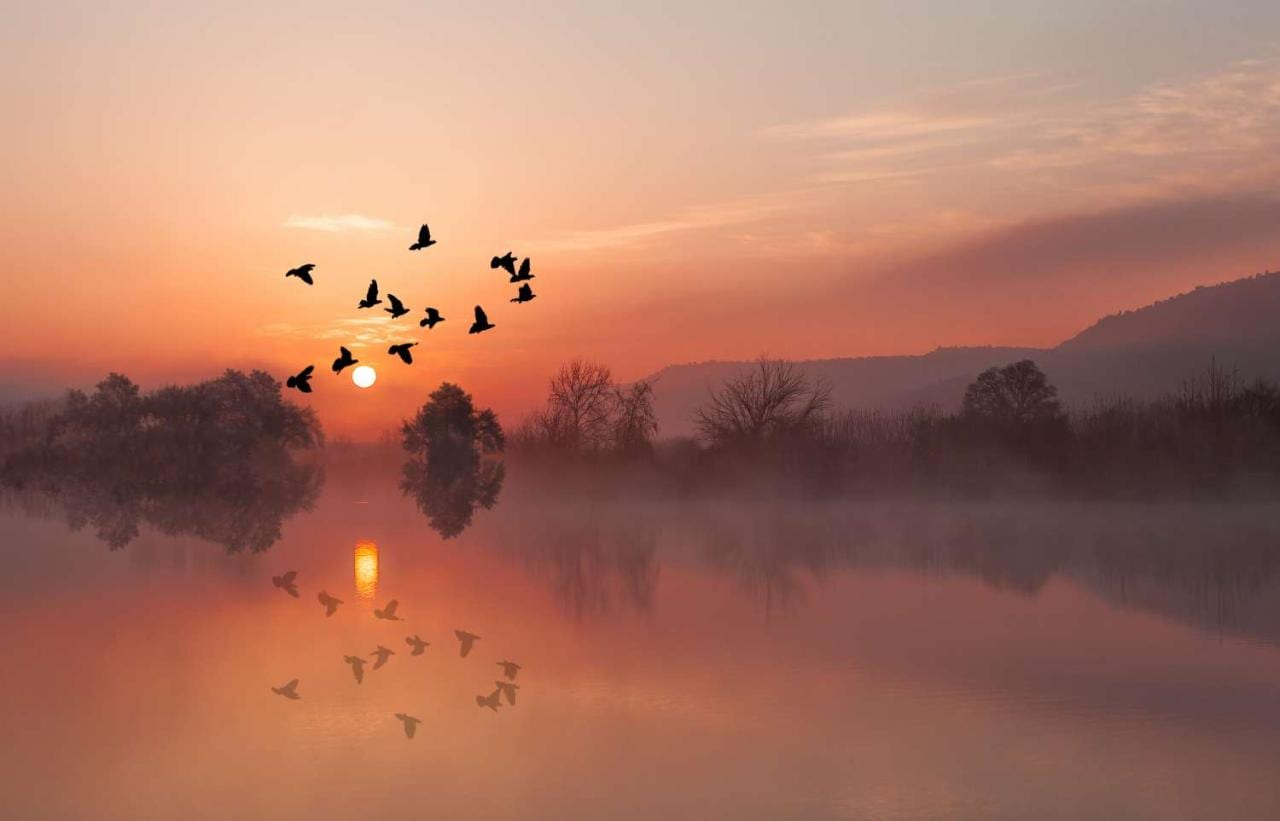 Birds flying at sunset against backdrop of lake