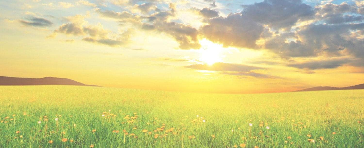 Field of grass and flowers on a sunny day